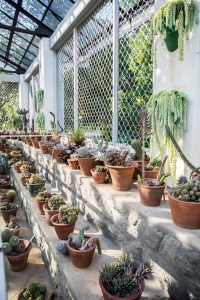 Cacti House in the Royal Botanical Gardens (Peradeniya Park), Kandy, Sri Lanka. Photographed by Shika Finnemore - thebellephant.com